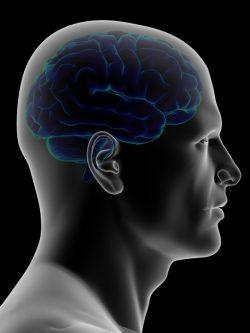 brain_2569045.jpg