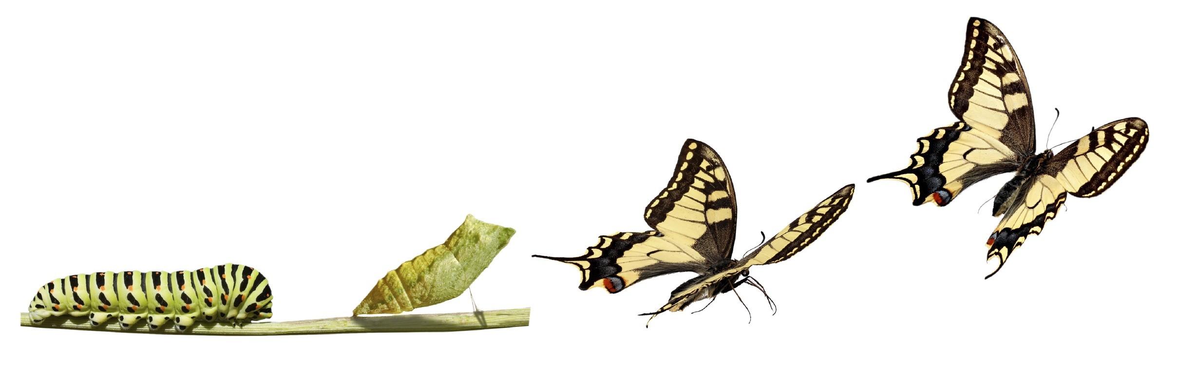 butterfly-morph_9820211.jpg